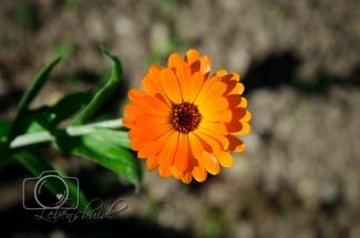 Naturbilder Blume