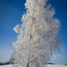 winter-lebensbuidl-veronika-arnold-4-von-10