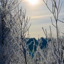 winter-lebensbuidl-veronika-arnold-5-von-10