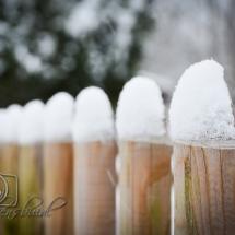 winter-lebensbuidl-veronika-arnold-7-von-10