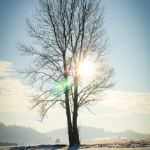 winter-lebensbuidl-veronika-arnold-8-von-10